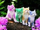 #Colorful Kittens