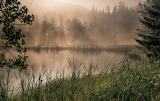Lake Forests Fog Grass Nature