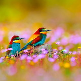 * Bee Eaters in a Field of Flowers...