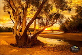 Julie Fletcher Photography 'Fitzroy River Fitzroy Crossing'