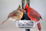 I told you the humans haven't filled the feeder yet