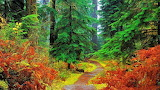 #Forest Path