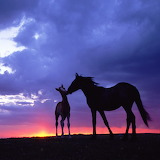 Mare and Foal...