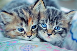 Two Cute Kittens...