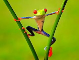 Funny Frog...