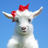 ☺♥ Cute baby goat...