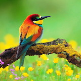 *Bee Eater in the Meadow...