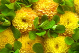 ☺ Yellow beauties...
