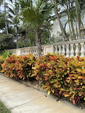 Crotons in Key West