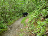 Smoky Mt Bear Yup