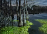Near The Town of Ebro in the Florida Panhandle