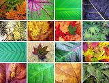 ☺ Collage- Leaves...
