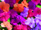 ☺♥ Colorful beauties...