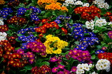 ☺ Colorful beauties...
