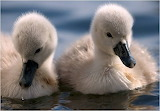 Two Ugly Ducklings...Not!