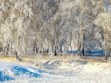 Russia Winter Trees Snow 468304