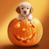 ☺Little Pumpkin...