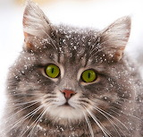 *Snow Kitty...