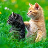 Two Funny Kittens...