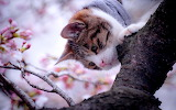 Kitty on the branch
