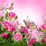 ☺ Roses and butterflies...