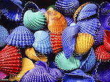Colourful Shells - istockphoto image 187457107