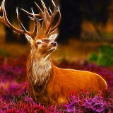 *Mighty Stag...