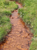 Another red beck