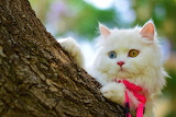 ☺♥ Watching from behind a tree...