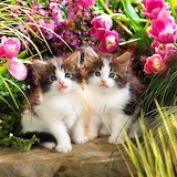 ☺Two Cute Sisters...