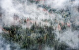 USA Parks Forests Yosemite Fog Nature