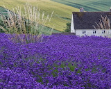 ☺ House by a lavender field...