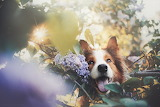 Beautiful Dog-Ksenia Raykova