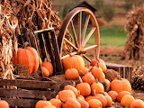 #Fall Harvest Display