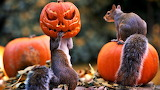 #Squirrels Halloween Fun