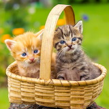 Two in a basket...