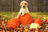 Cute Pumpkin...
