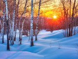 sunset in the snowy forest