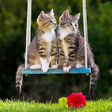 Kittens On a Swing...
