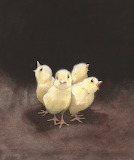 Quentin Greban, Chicks