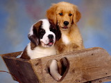 Two Adorable Puppies...