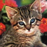 ☺Kitten Portrait...