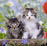 😻Two Cute Kittens...