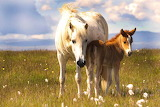Mare and Her Foal...