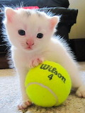☺Let's Play Tennis!