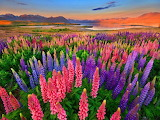 A field of flowers color gorrgeous