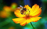 Busy Bee...