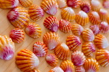 HawaiianSunriseShells
