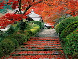 Steps to a Japanese Garden