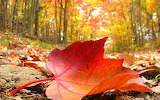 Nature-leaves-fallen-leaves-HD-Wallpapers